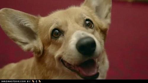 corgi dogs Queen Elizabeth II r-i-p royal family - 6576532480