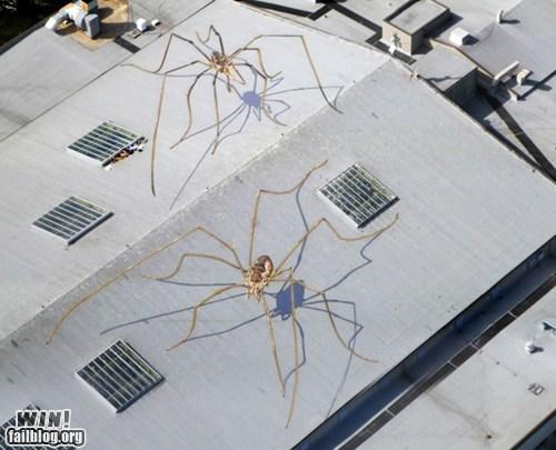 graffiti hacked irl illusion perspective spiders Street Art