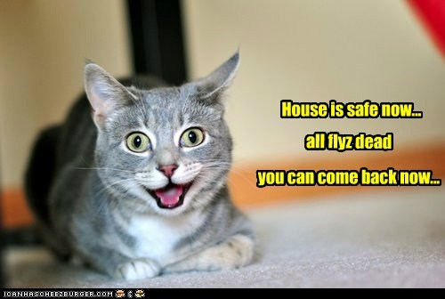 captions,Cats,dead,flies,house,safe