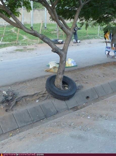 tire,tree