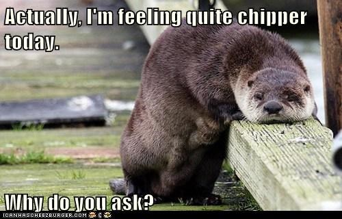 otter Sad chipper why do you ask actually slumping why-do-you-ask - 6576655872