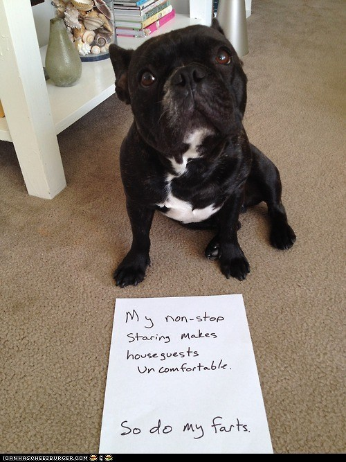 dogs dogshaming farts shame sign Staring uncomfortable