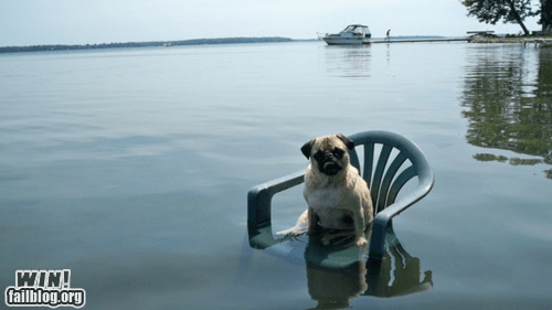 chair,derp,dogs,lake,pug