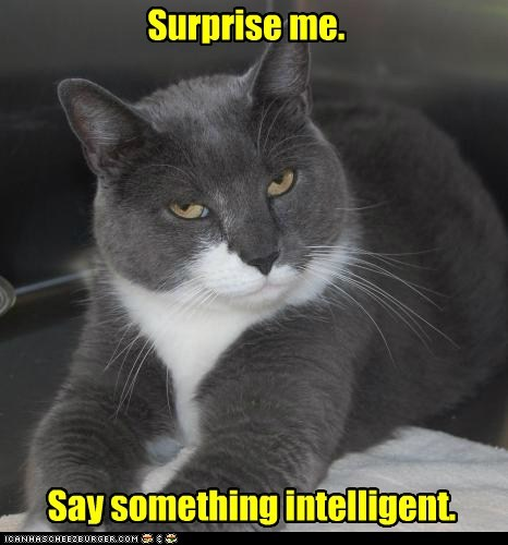 captions Cats intelligence smart superior superiority - 6577020160