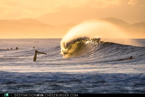 australia beach crest wave - 6577137152