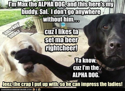 I'm Max the ALPHA DOG, and this here's my buddy, Sal. I don't go anywhere without him. . . Ya know, cuz I'm the ALPHA DOG. cuz I likes ta set ma beer rightcheer! Jeez, the crap I put up with, so he can impress the ladies! ) ) *smackity* *smack* cuz I likes ta set ma beer rightcheer! Ya know, cuz I'm the ALPHA DOG. I'm Max the ALPHA DOG, and this here's my buddy, Sal. I don't go anywhere without him. . .