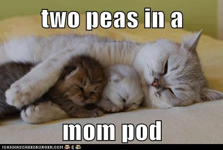 captions,Cats,mom,peas,peas in a pod,pod