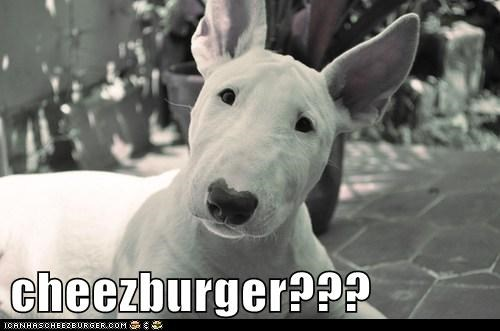 Cheezburger Image 6577823488