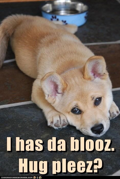dogs,puppy,shiba inu,hugs,the blues,sad dog