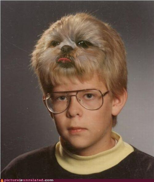 Awkward dogs fake hair photoshopped portraits school photos shopped pixels they said i could be anyt they said i could be anything wtf - 6578206208