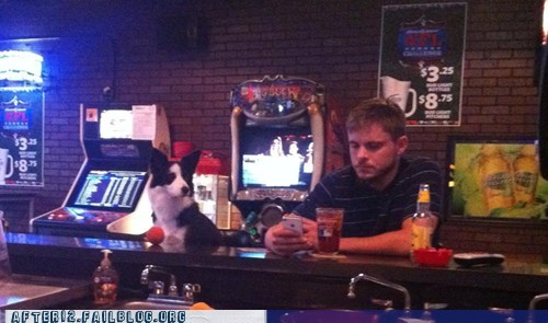 at the bar,crunk critters,dogs