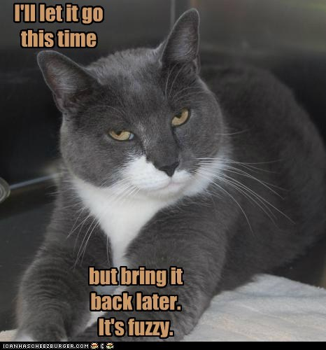 Ill Let It Go This Time Lolcats Lol Cat Memes Funny Cats