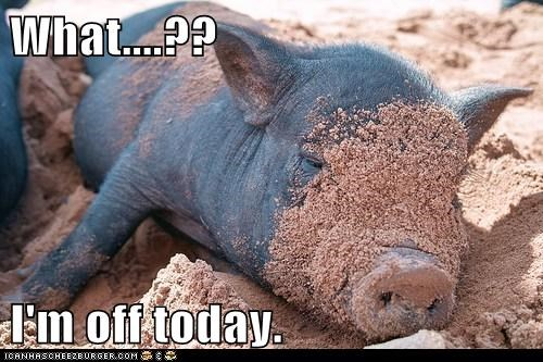 day off off pig sleeping tired what - 6578332928
