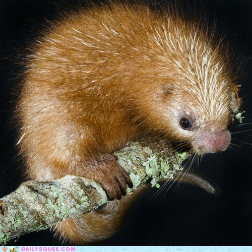 branch porcupine prickly spines tree whatsit wednesday whiskers - 6578344448