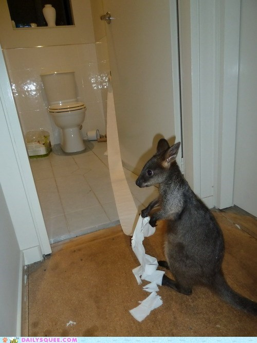 kangaroo,toilet paper,bathroom,squee,house guest