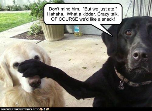 shut up labrador golden retreiver snack - 6578577152