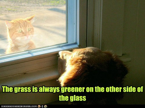 dogs cat door window grass is always greener golden retriever - 6578653440