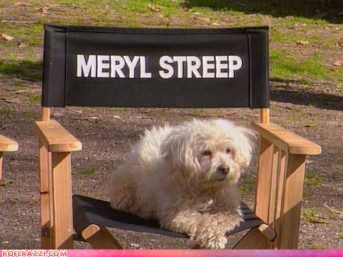 actor,celeb,dogs,funny,Meryl Streep