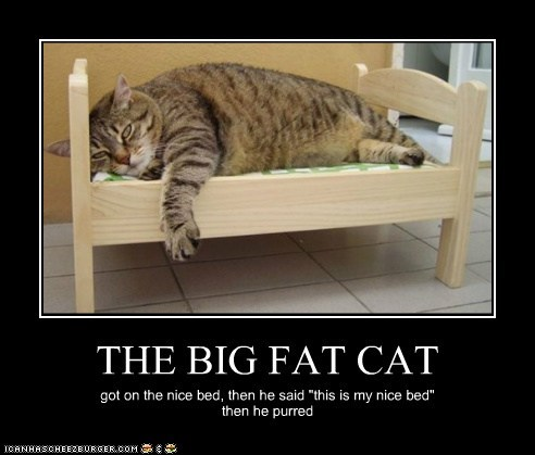 "THE BIG FAT CAT got on the nice bed, then he said ""this is my nice bed"" then he purred"
