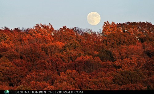 colors,fall,Forest,landscape,moon