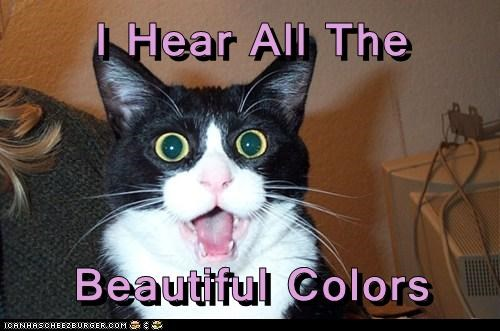 beautiful,captions,Cats,colors,drugs,high,synesthesia