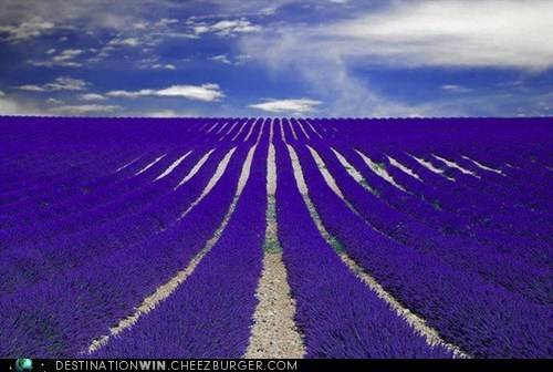 field,france,lavender,pretty colors