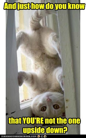 captions Cats deep philosophy upside down - 6579351552