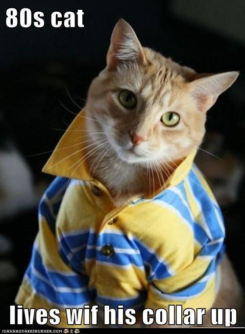 captions Cats collar pop up - 6579355648