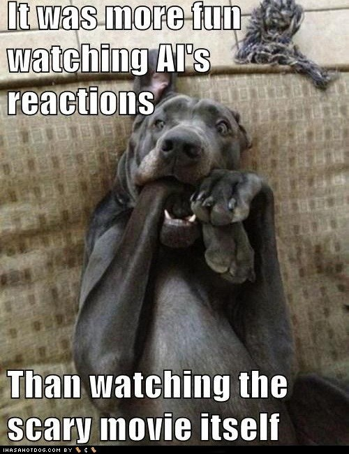 dogs what breed scary movies reaction scaredy dog