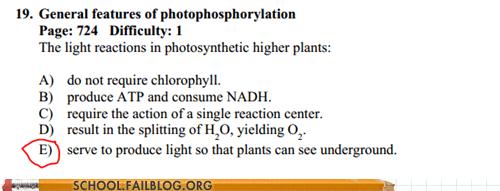 plants test humor - 6579667200