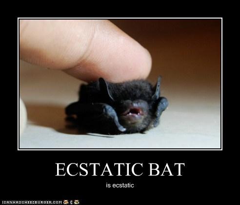 ECSTATIC BAT