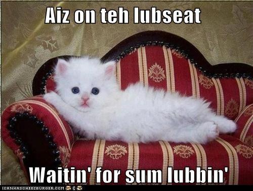 captions Cats love romance wait - 6579951872
