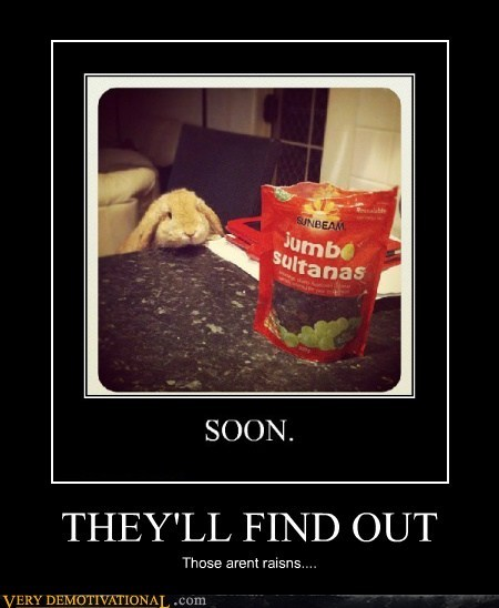 bunny poop raisins SOON - 6580048128