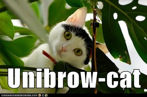 captions,Cats,eyebrows,unibrow