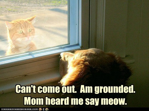 Can't come out. Am grounded. Mom heard me say meow.