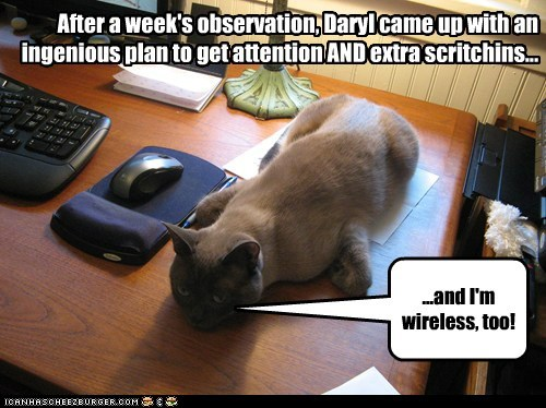 After a week's observation, Daryl came up with an ingenious plan to get attention AND extra scritchins... ...and I'm wireless, too!
