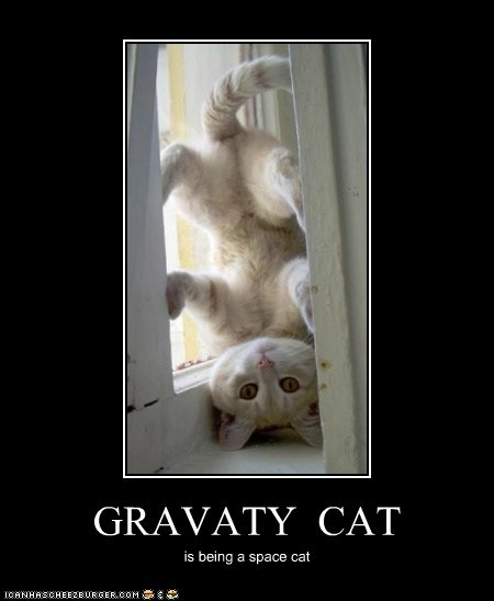 GRAVATY CAT is being a space cat