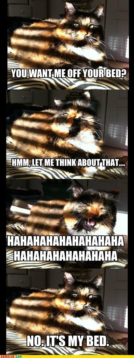 Cats,hahahahaha,mine