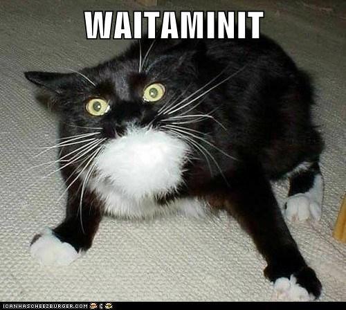 captions Cats wait - 6580324608