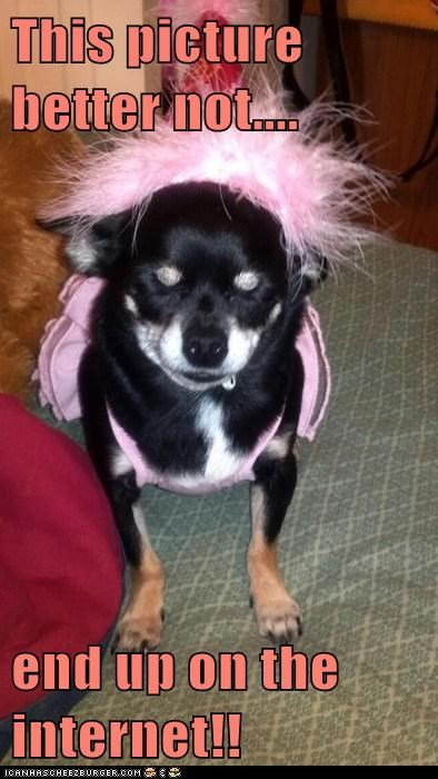dogs chihuahua tutu ballerina embarrassing dont-put-this-on-the-internet internet - 6580344576