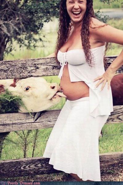 cow,midriff,pregnant
