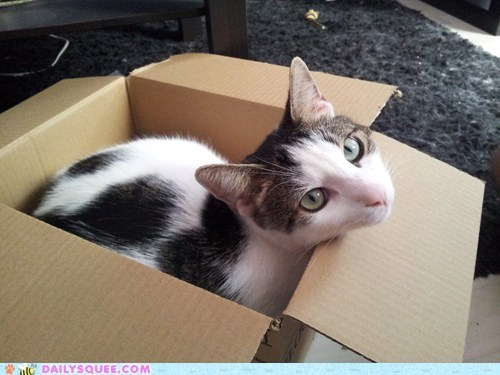 box cat if i fits i sits pet reader squee - 6580496384