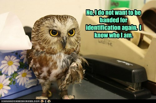 Owl banded identification annoyed i know no categoryvoting-page - 6580499456