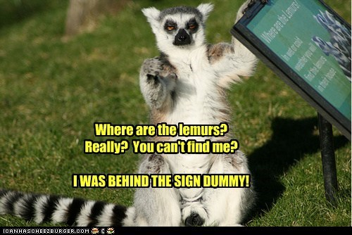 Where are the lemurs? Really? You can't find me? I WAS BEHIND THE SIGN DUMMY!
