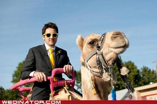 camel groom Idaho ride - 6580559616