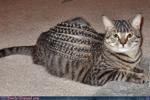 cat,cornrows