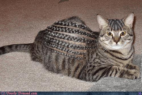 cat cornrows - 6580592384