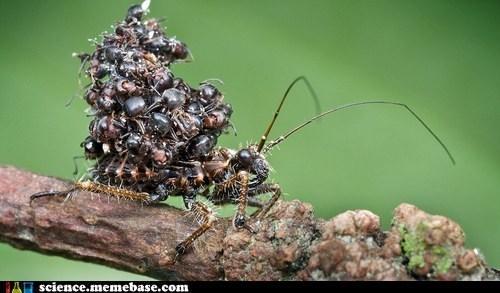 ants assassin biology bug defense - 6580617472