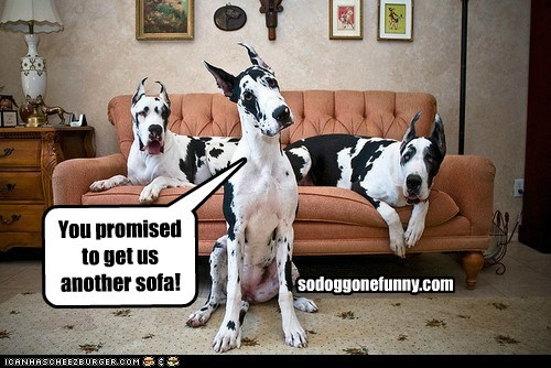 You promised to get us another sofa! sodoggonefunny.com