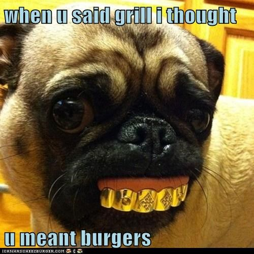 dogs pug grill teeth confused gangsta gold - 6580773888
